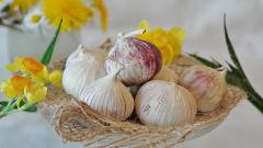 cesnak kuchynský v gastronómii
