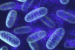 Pearsonov syndróm- porucha mitochondrii